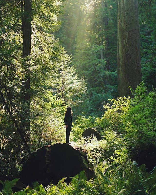 #FBF - Redwoods 2015