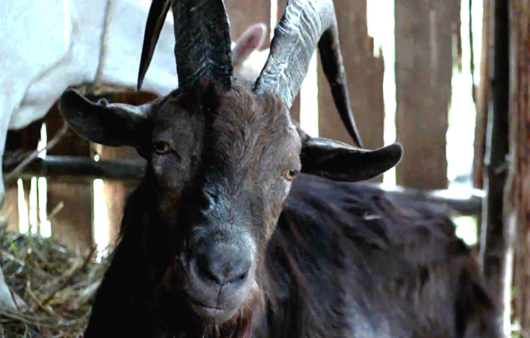 black phillip.jpg