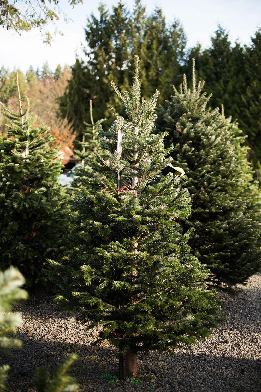 Christmas Tree 201-2.jpg