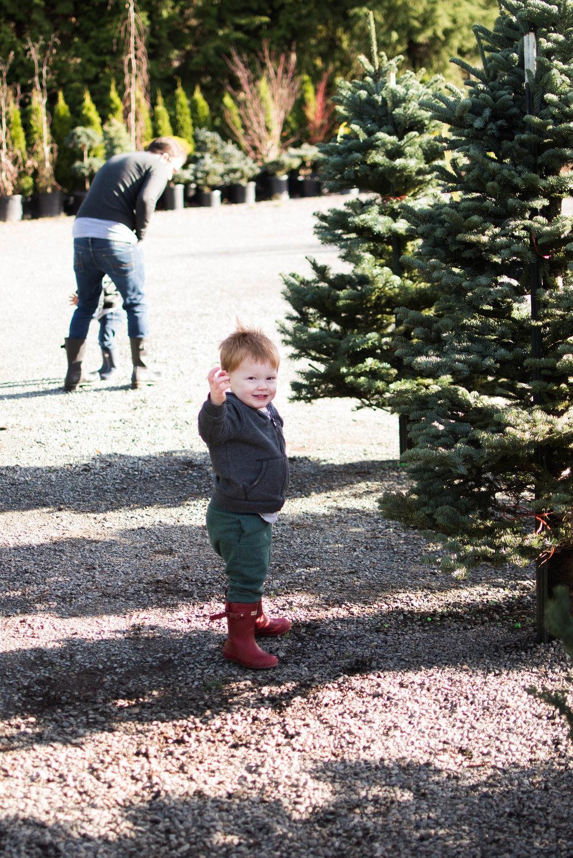 Christmas Tree 201-5.jpg