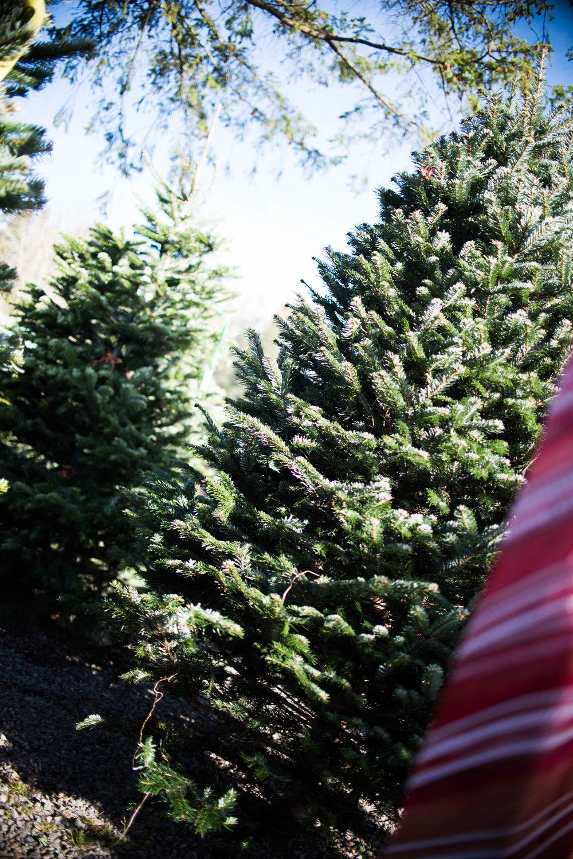 Christmas Tree 201-6.jpg