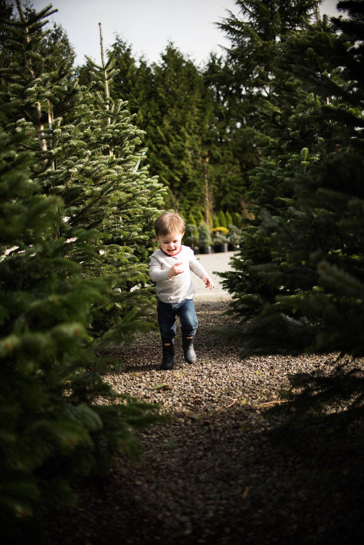Christmas Tree 201-11.jpg