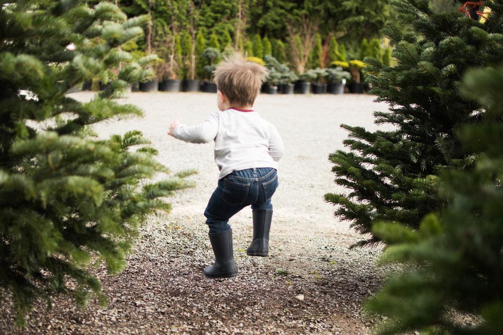 Christmas Tree 201-14.jpg