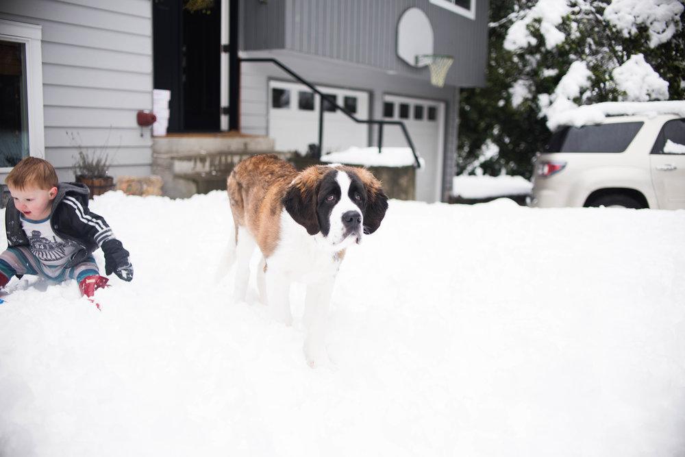 Feb17 Snow Day-25.jpg