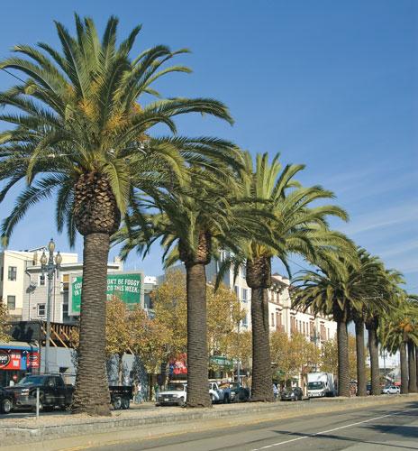 market-palms.jpg