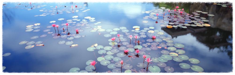 """""""No Mud, No Lotus""""~ Thich Nhat Hanh"""