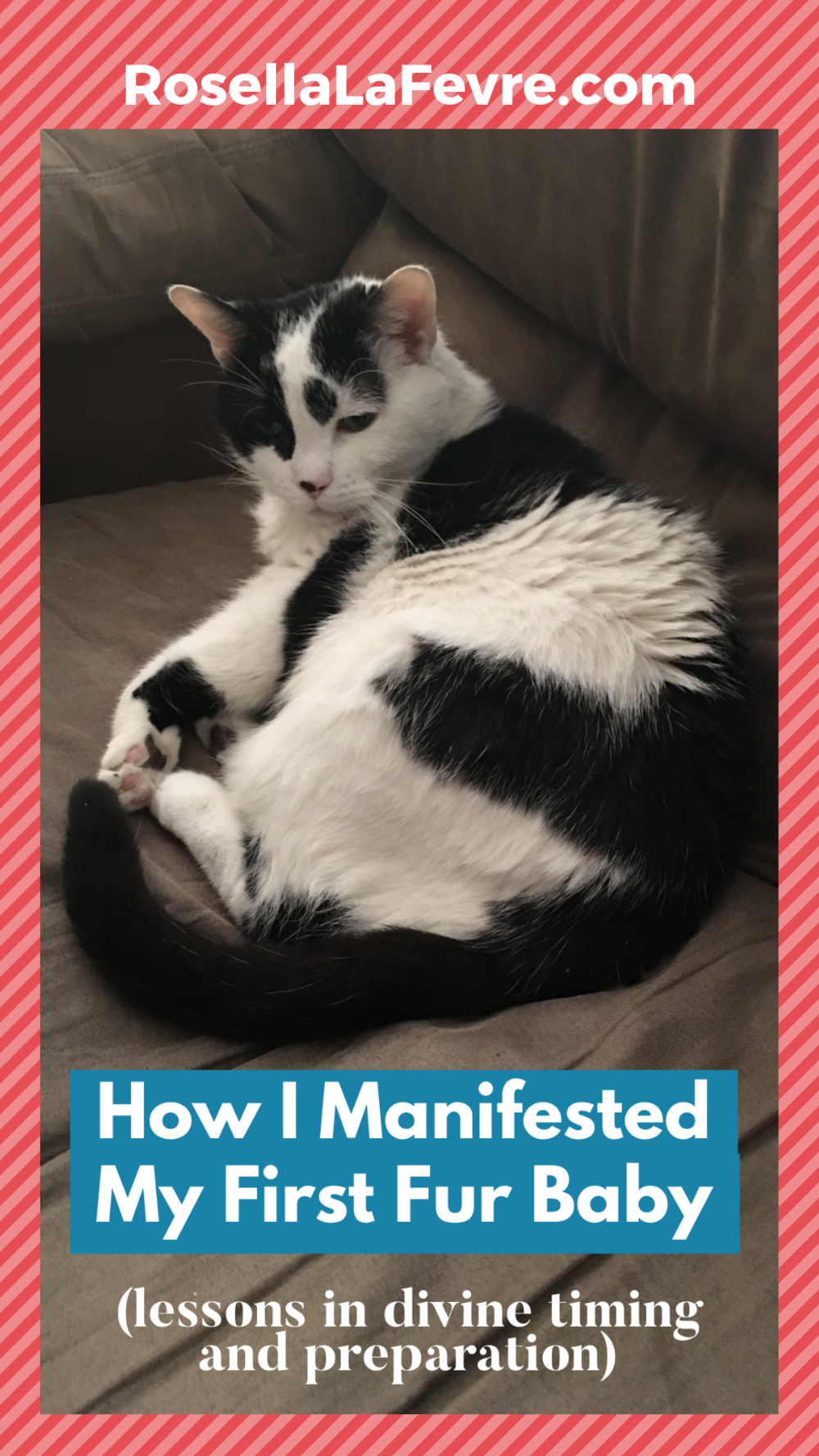 divine-timing-manifestation-how-i-manifested-my-first-cat.png