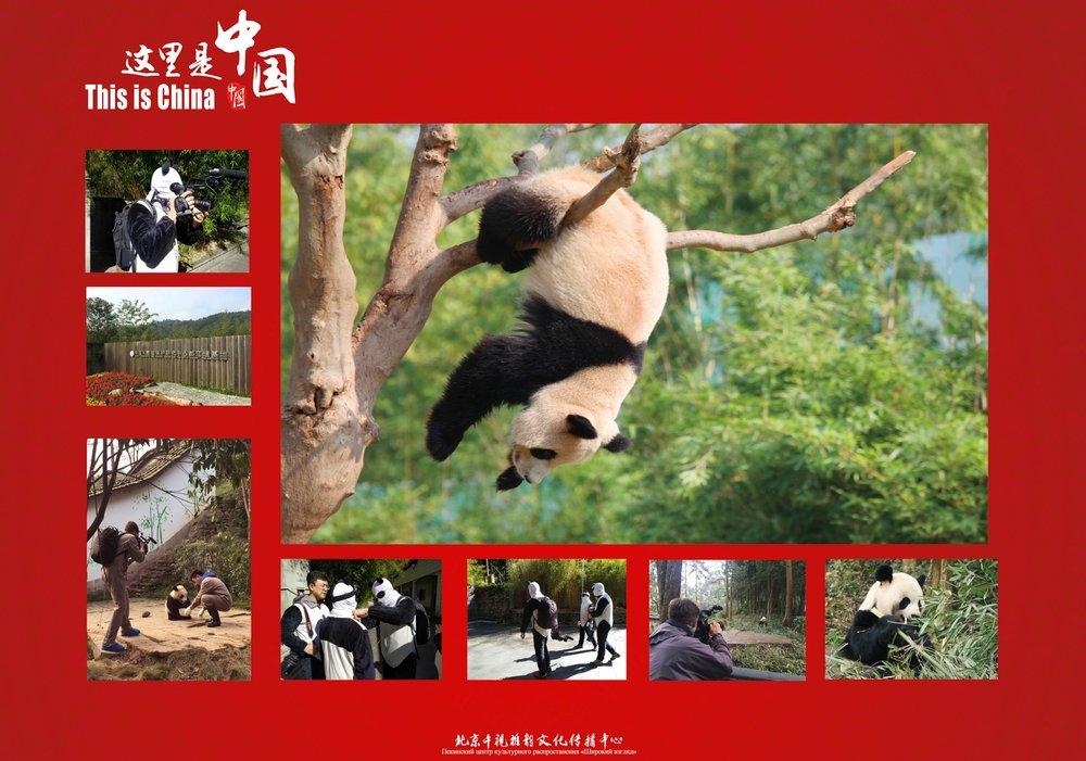 Episode: Panda Land