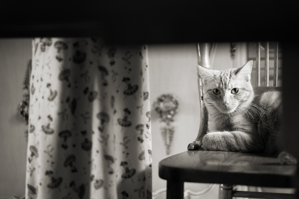 Columbus Ohio photographer captures cat on chair with her owner in old home in Worthington.