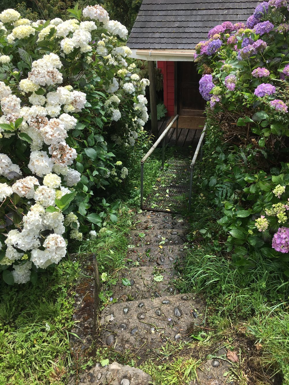 After trimming the hydrangeas.  Showing the path to the cabana.