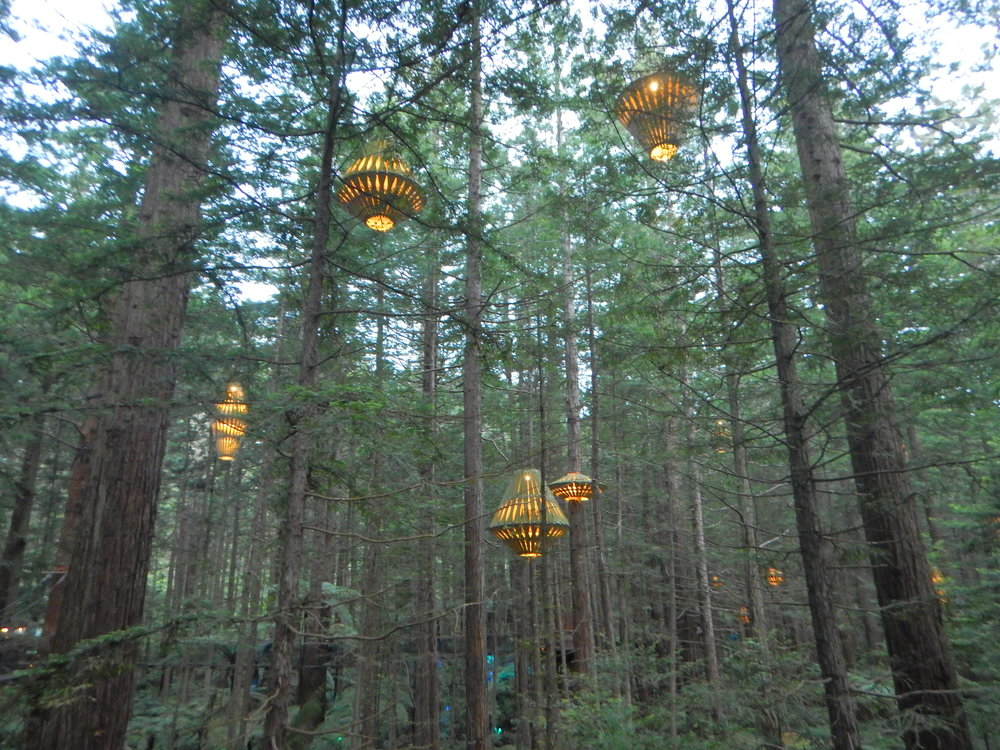 lanterns on the redwoods treewalk.