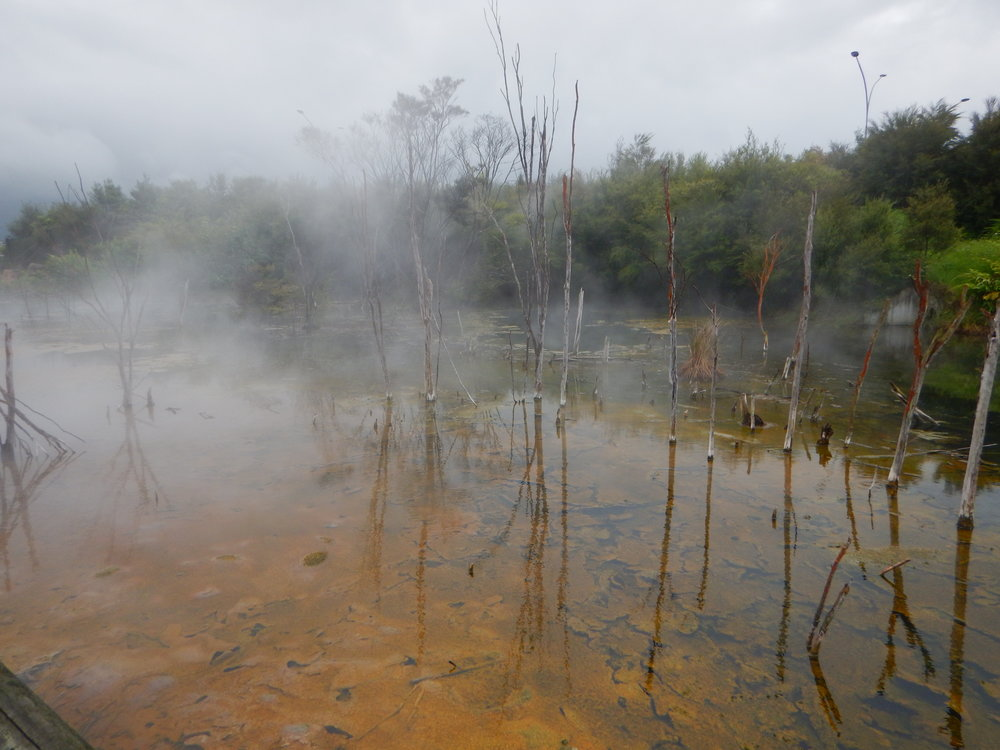 A misty day at kuirau Park, noted for its geothermal activity.