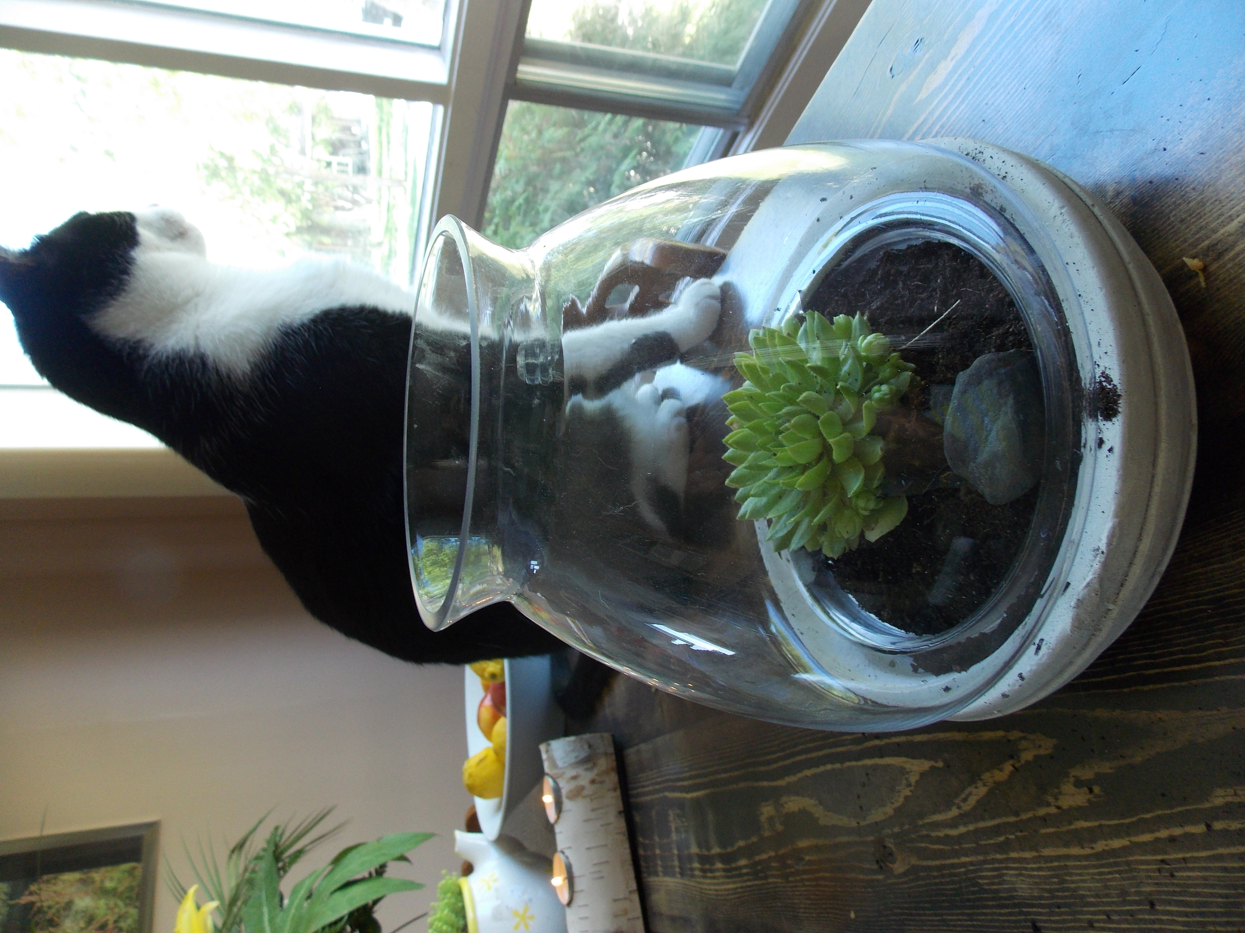 Station your new plant where the cat can guard it best.