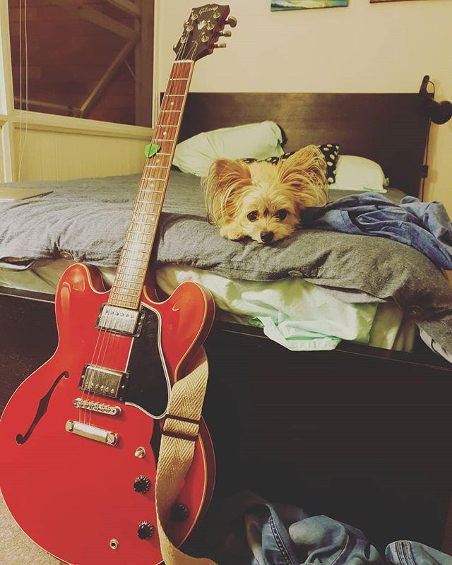 Dog days. ❤  #music #singersongwriter #australia