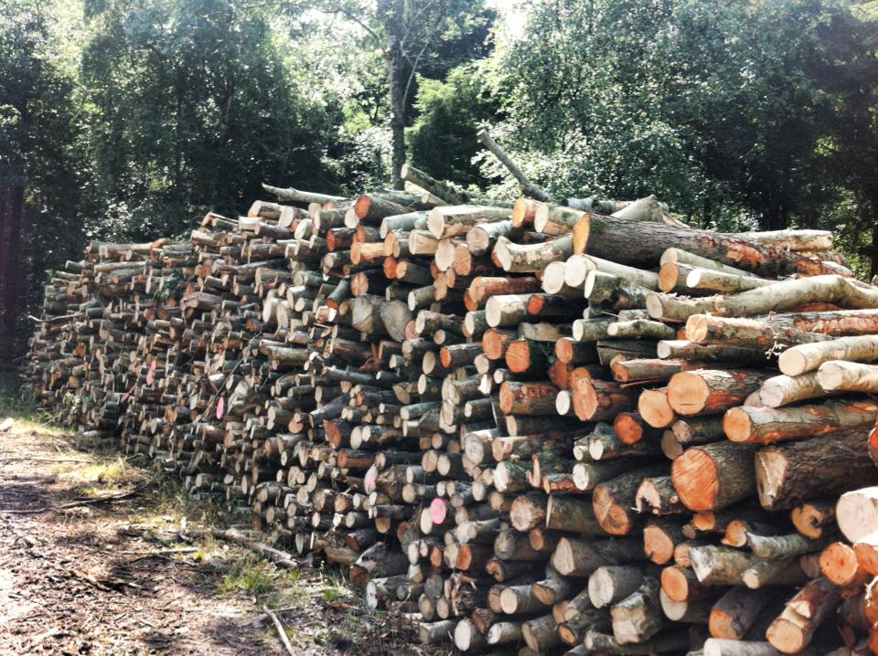 Ash, silver birch and alder cord from Stavordale .jpg