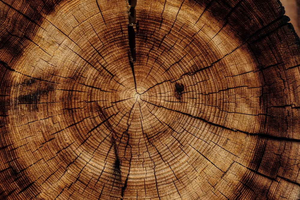 SILVAWOOD LTD   Firewood I Tree Services I Countryside Management    Find Out More