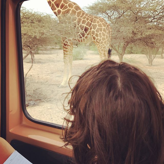 Throw back to the weekend, when we celebrated this little man's birthday amongst wildlife at @sirbaniyasae island. We were lucky enough to see giraffes up close and the resident cheetah brothers preparing to catch their breakfast (too gruesome to watch so we just kept driving!), found out all about the different species of gazelles and oryx the are native to the Arabian Peninsula and inhabit the island, and were awed by the dozens of peacocks doing what they do best, show off their gorgeous tails (one of mummy's absolute favourite things). Oh, and mummy had a trip down memory lane to the days when coming here was mainly for work and meetings. You have been good to us, Sir Bani Yas. See you soon again 😘