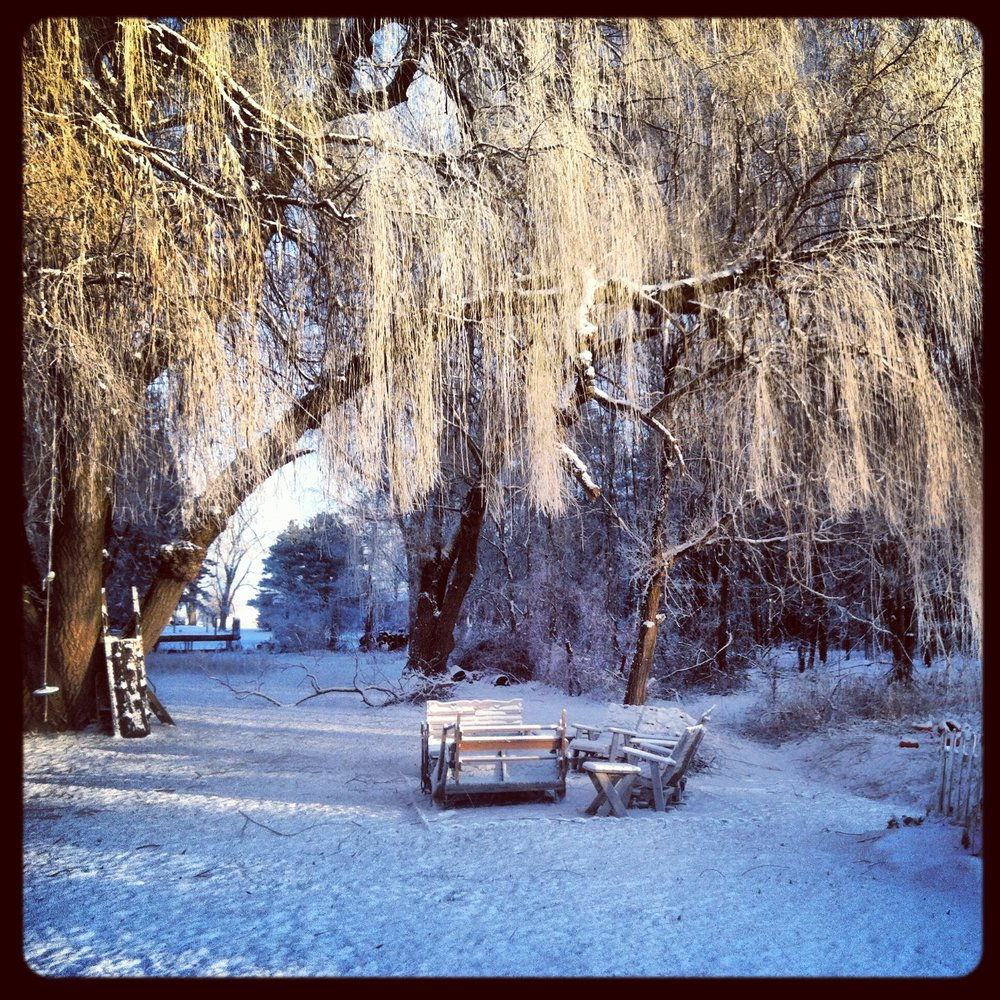 The weeping willow - Thanksgiving weekend - 2014.