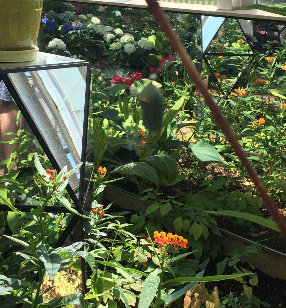 My friend snapped this photo during the Butterfly exhibit at Frederik Meijer Gardens. Ironically, the most blurry part of the image is the monarch chrysalis - quite fitting though since much of the time in the cocoon feels like a blur.