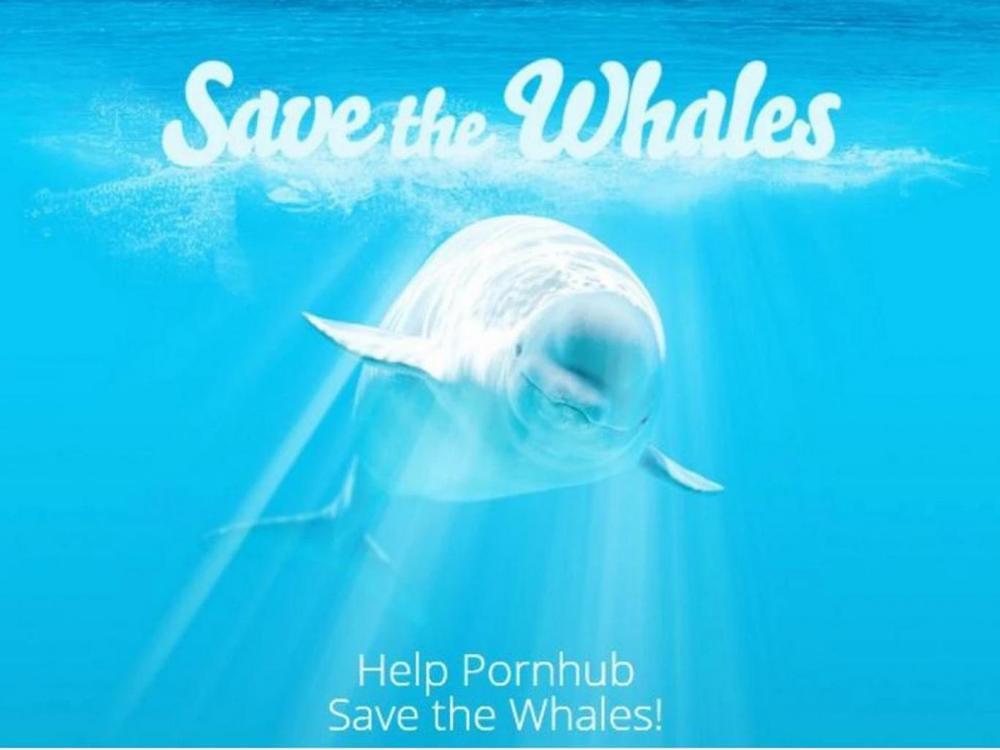 pornhub-whale-campaign.jpg