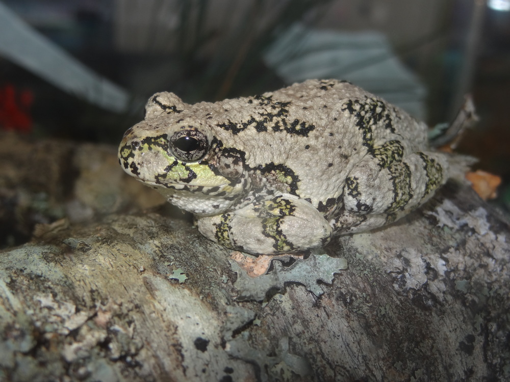 frog DSC00828.JPG