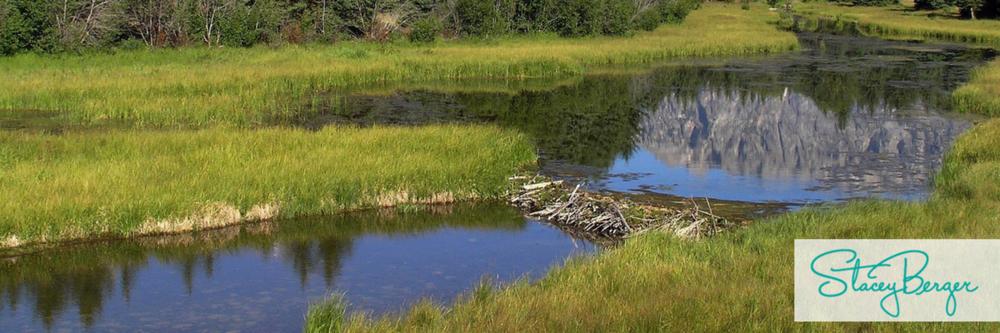 beaver dam-2.png