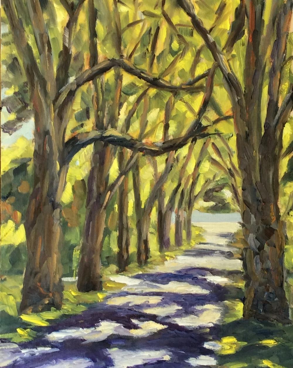 Canopy in Light   Oil 14 x 11