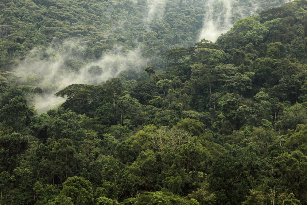 Volkanlar Milli Parkı (Parc National des Volcans)   Canon 5dMkII + Canon 24-105mm f4.0