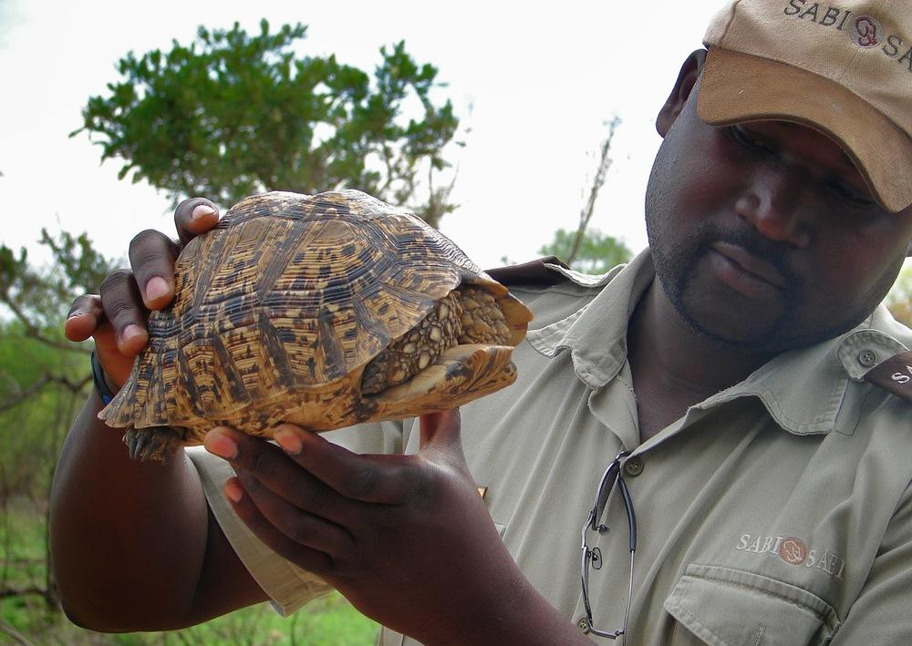 Lawrance ve yolumuza çıkan bir leopar kaplumbağası   Sony DSC-H1