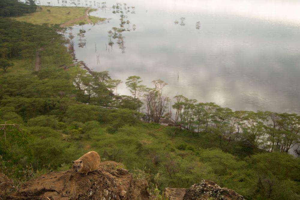 Baboon Hill'den tasmis Nakuru Gölü manzarası   Canon 1dX + Canon 24-105mm f4.0