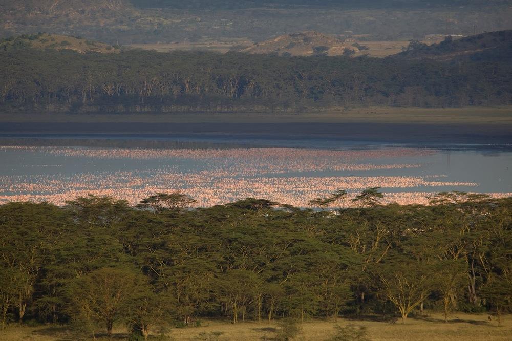 Nakuru'da flamingolar   Canon 5dMkII + Canon 24 - 105mm f4.0