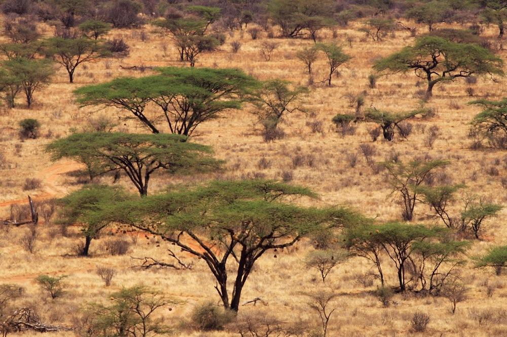 Kenya'nın kuzey bölgesi içinde yer alan Samburu    Canon 30d + Canon 400mm f5.6