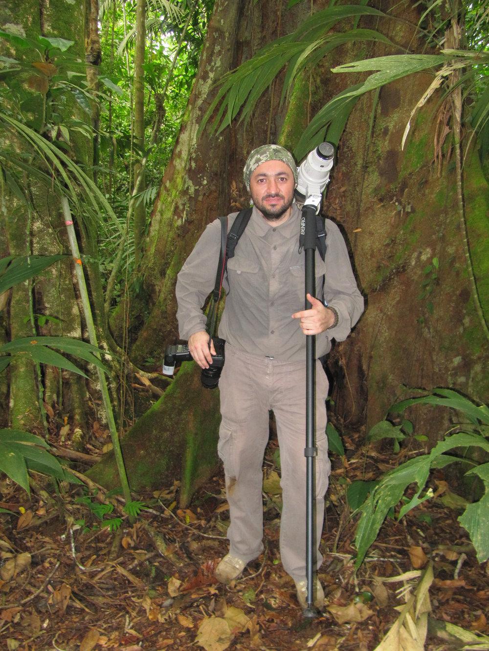 Bulut ormanında dolaşırken...