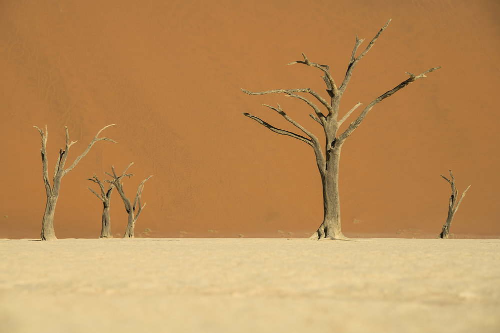 Deadvlei'deki ölü ağaçlar
