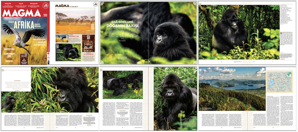 "MAGMA Magazine Issue #5   June-July 2015 | Pages 94-103   ""Mountain Gorillas: Nature Staring"" Words and photo by Burak Dogansoysal"