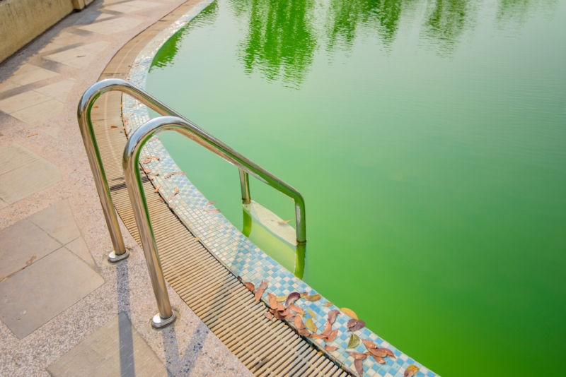 Thompson Pool and Patio, Norman Pool Store, Algae, how to get algae out of my pool