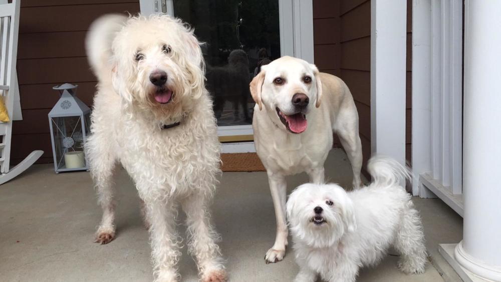 Slugger, Omaha and Bogart