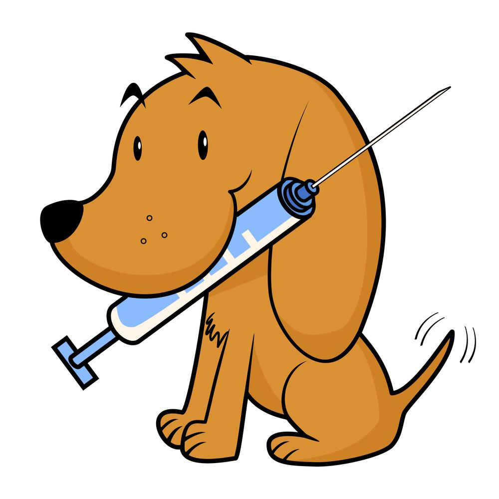 dog with needle.jpg