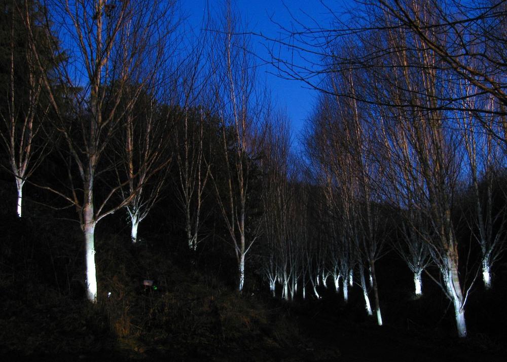 PowerPlant Durham-Ice Forest-Ulf Pedersen 0911 .jpg