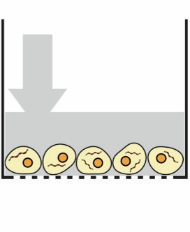 The delivery solution gently permeabilizes the cell membrane and the cargo rapidly diffuse into the cell.