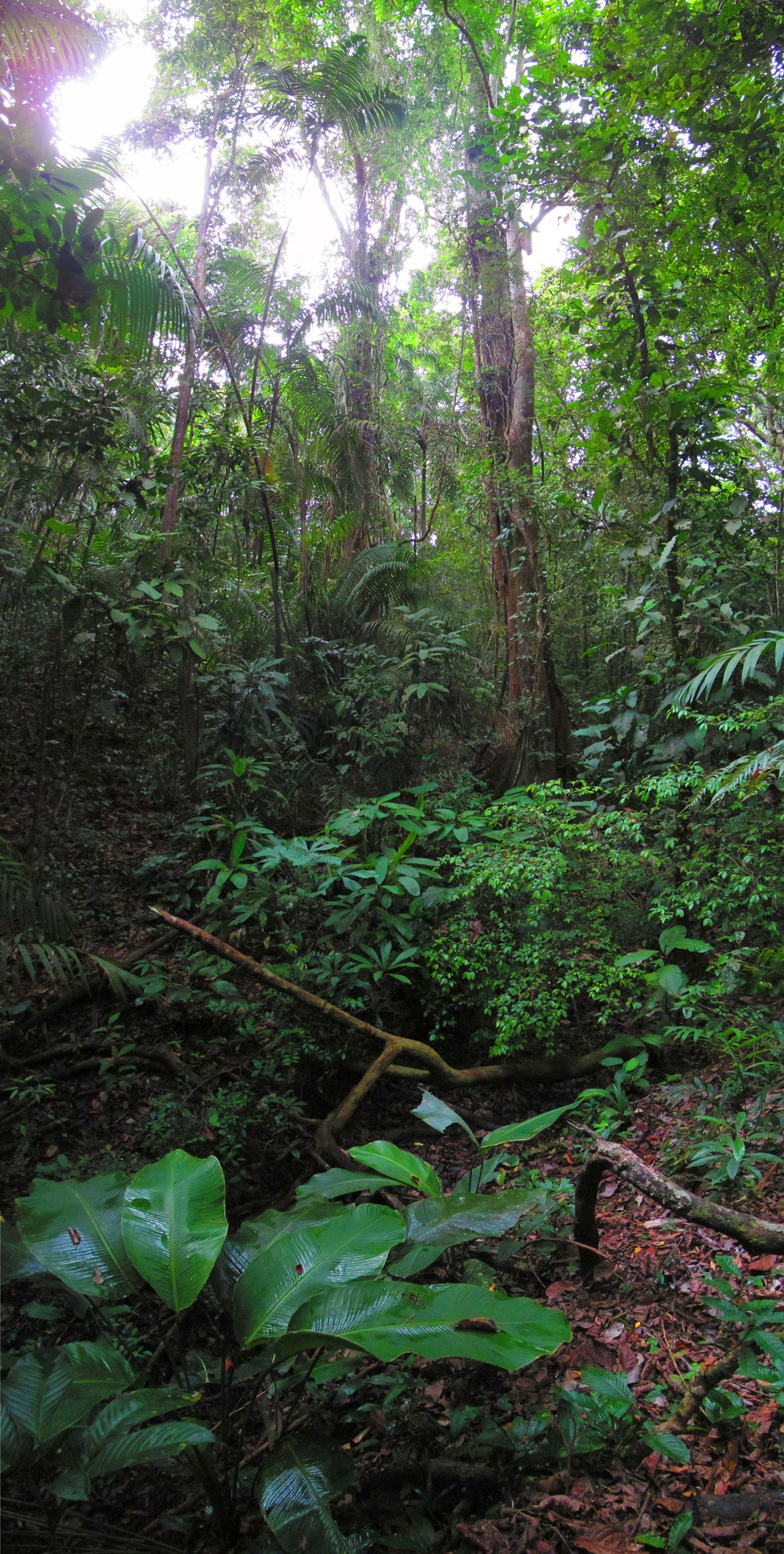 Lowland tropical rainforest