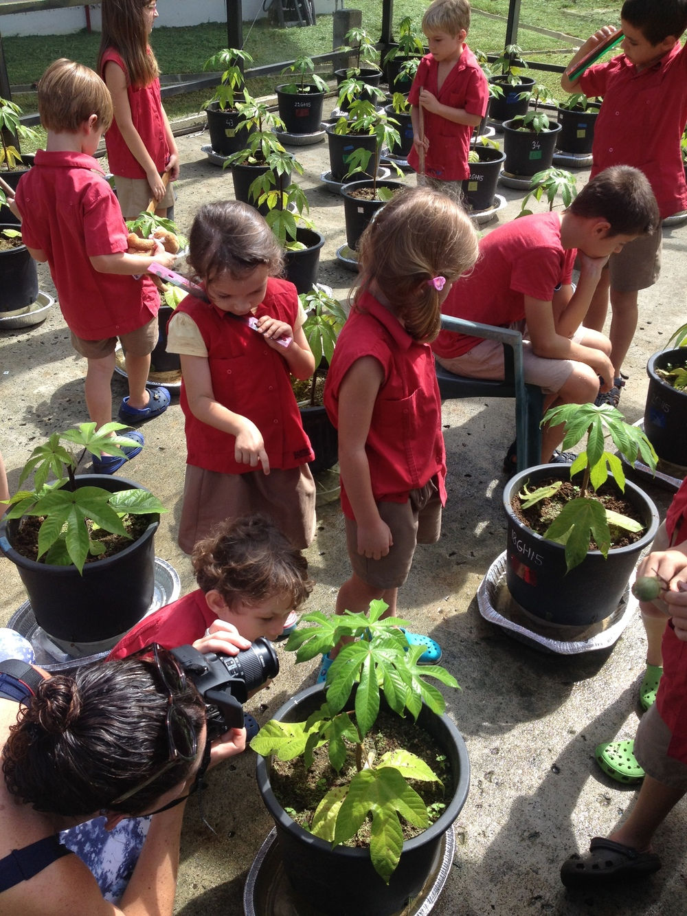 Gamboa Discovery School explores the transplanted greenhouse colonies