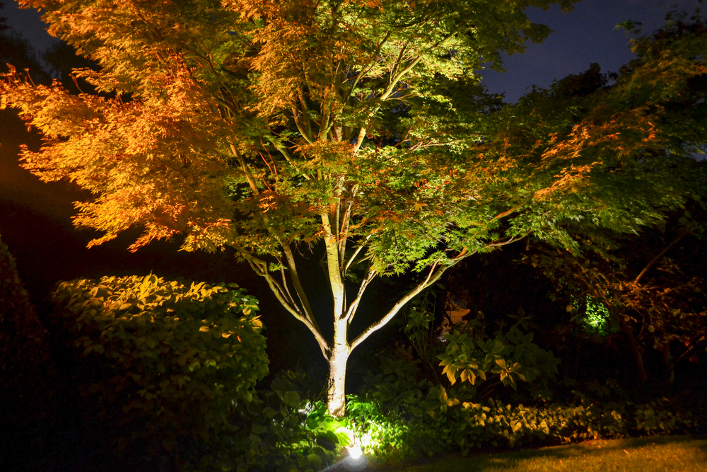 Lighting  Lighting can transform an outdoor space from a usable space from daytime to night time.  Perennial Planning installs a variety of lighting for outdoor spaces. We can safely route power just about anywhere in our landscapes for a full visual effect.
