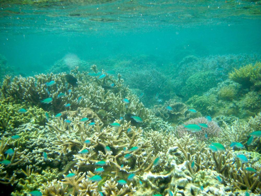 Fijian Reef