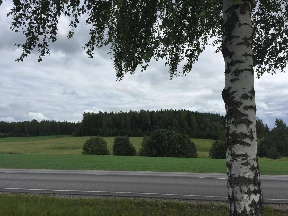 Random roadside en route / 19 July