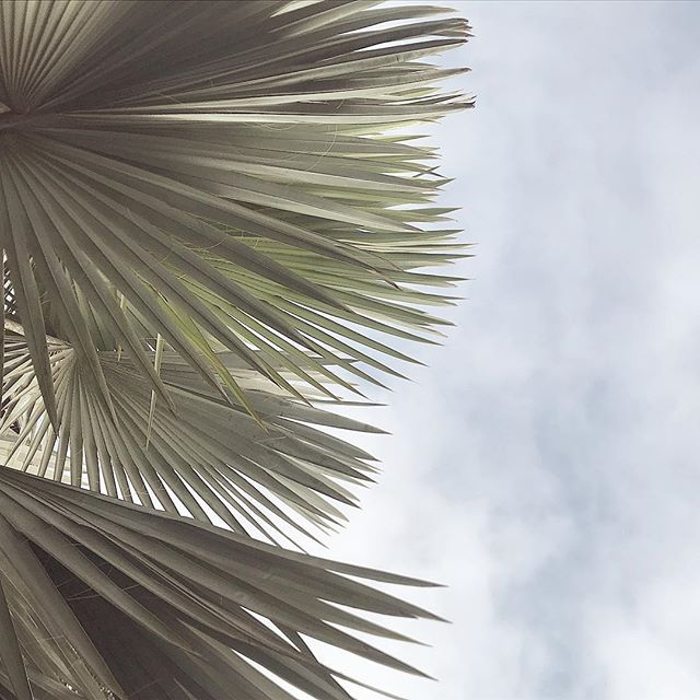 Oh you beautiful palms. Can I lay under you?