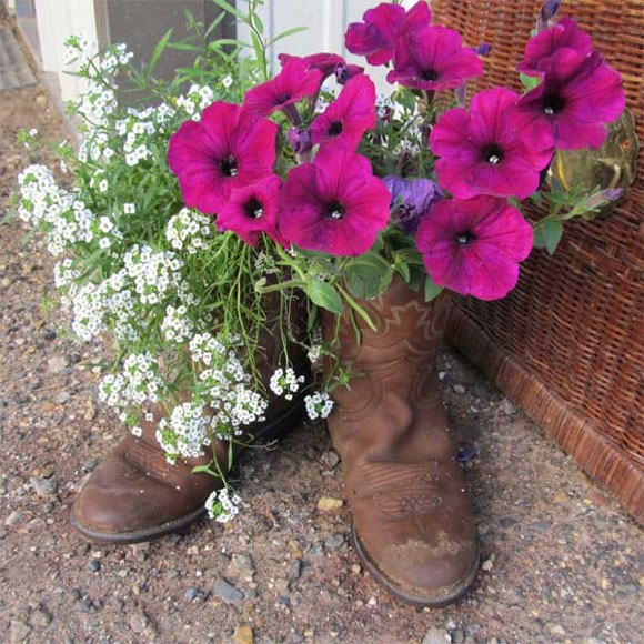 These old boots look beautiful holding some bright colored flowers.