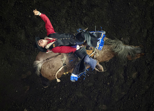 Cole Goodine (Carbon, AB) takes part in the first go round of Bareback Riding during day one of the Canadian Finals Rodeo at Rexall Place, in Edmonton, Alta. on Wednesday Nov. 11, 2015. David Bloom/Edmonton Sun/Postmedia Network David Bloom/Edmonton Sun