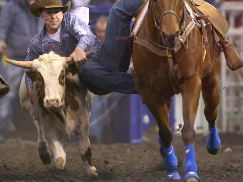 Morgan Grant competes in the steer wrestling event on Day 2 of the Canadian Finals Rodeo at Rexall Place in Edmonton on November 12, 2015.RYAN JACKSON/EDMONTON JOURNAL