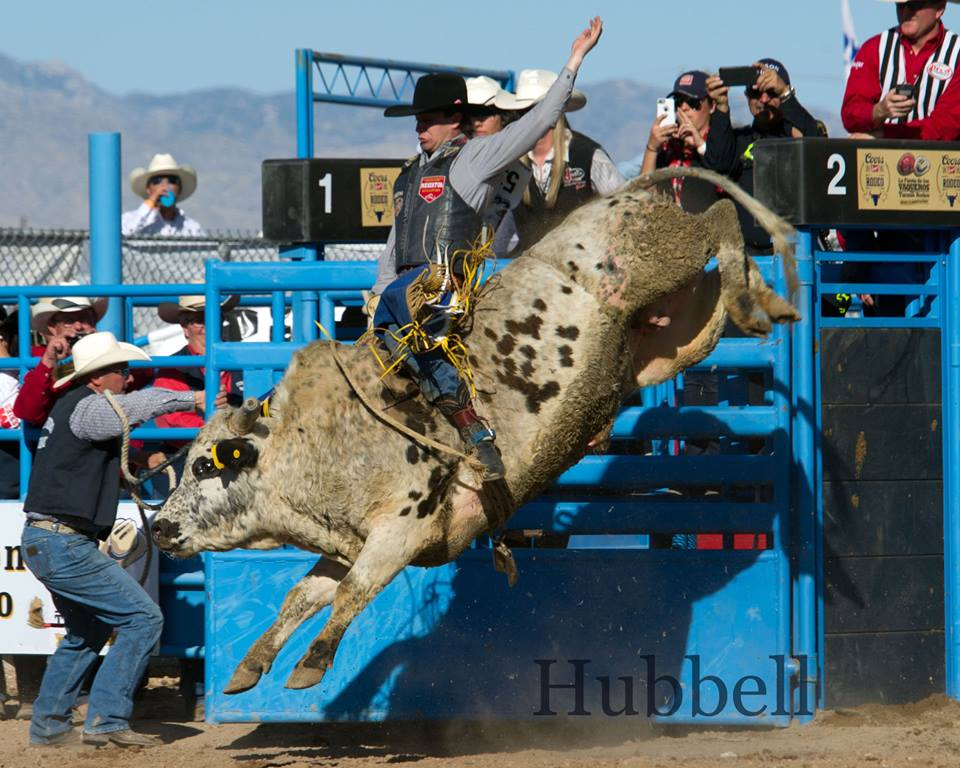 Chet Johnson was posts 81.5 in saddle bronc and Tyler Smith leads the pack in bull riging with 88 in bull riding. Come along for the ride - gates open at 11, kids' rodeo at 12:30, ProRodeo at 2. Photos by Dan Hubbell for Tucson Rodeo.